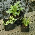Vazonas vandens augalams, lelijoms 30x30x25 cm